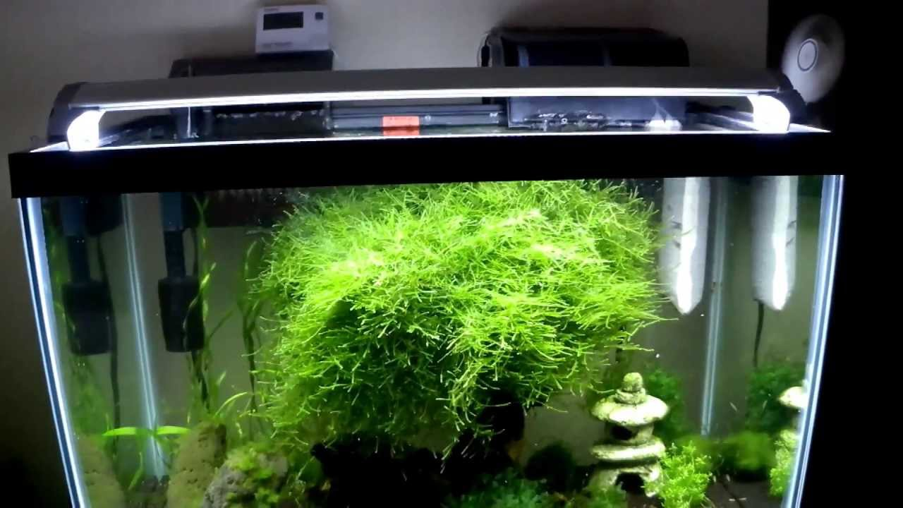 Things to consider when buying an aquarium filter hat for Travel fish tank